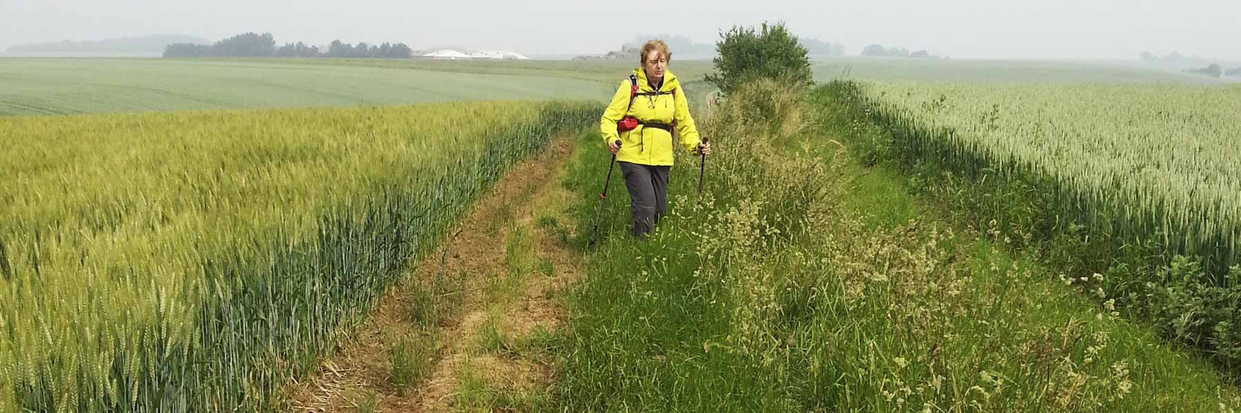 Association Internationale Via Francigena